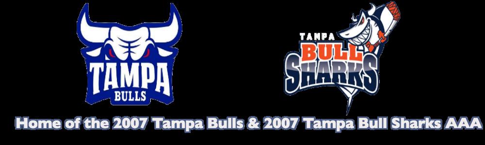 Tampa bulls