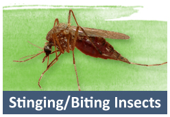Stinging / Biting Insects