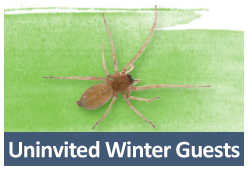 Winter Pests