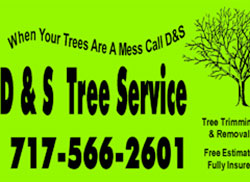 D&S Trees