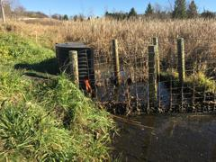 Partners for Fish and Wildlife Wetland Restoration