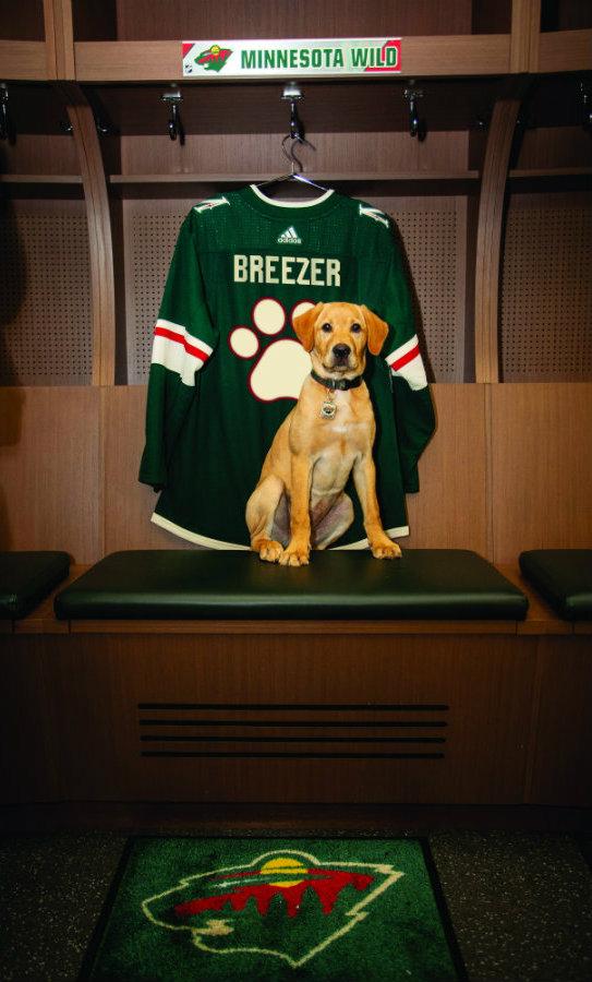 Breezer claims his spot in the Minnesota Wild locker room. Photo courtesy of the Minnesota Wild/Bruce Kluckhohn