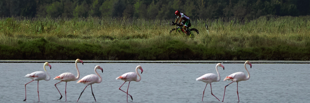 A single 5150 Cervia athlete biking through the countryside next to six flamingos standing in the water