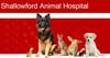 Sponsored by Shallowford Animal Hospital